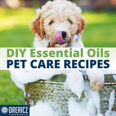 Having a toxic-free home and all natural body care products, is the start for living the abundant life, now continue that same pattern for your furry friends by using the below #DIY recipes. #essentialoils #petcare