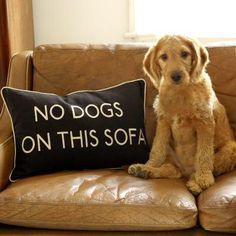 NO DOGS ON THIS SOFA!!!