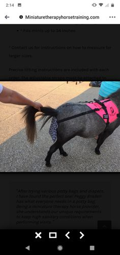 Miniature therapy pony wearing harness and poo bag. (None of the photos are mine and I do not claim to own them.) They are just minature horse therapy inspiration. I was unable to link the website. Horse Therapy, Pony, Miniatures, Horses, Website, Photos, Bags, Inspiration, Pony Horse