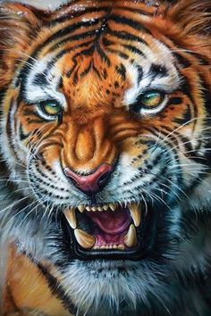 Wild Animal Wallpaper, Tiger Wallpaper, Tiger Images, Tiger Pictures, Beautiful Cats, Animals Beautiful, Cute Animals, Big Cats Art, Cat Art