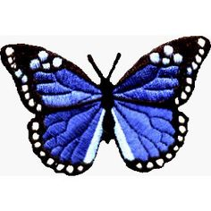 Blue Monarch Butterfly | Beautiful Blue Monarch Butterfly - Embroidered Iron on or Sew On Patch