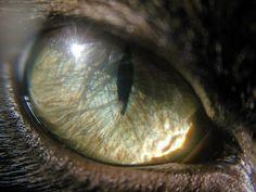 Nera's Eye. Closeup Macro. #libyanphotography#photographer#photo#phone #macro#lens#camera#eye#cats#mydubai#myabudhabi#dubai#abudhabi#metal#followme #like #followme #followalways by wal3dz