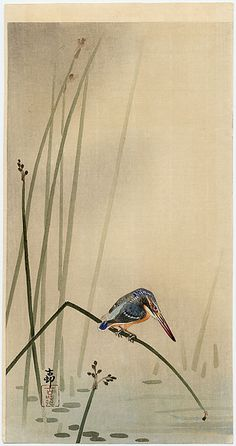 ca. 1920 - Shōson, Ohara -Kingfisher on the Stem of a Waterplant