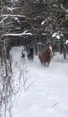 Funny Horses, Cute Horses, Pretty Horses, Horse Love, Beautiful Horses, Animals Beautiful, Funny Horse Videos, Horses In Snow, Funny Horse Pictures