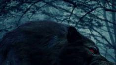 Dark Blood by Christine Feehan Book Trailer