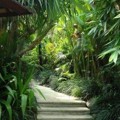 Villa Sarasvati at Dea Villas Bali. Central garden tropical walk. Lush Bali…