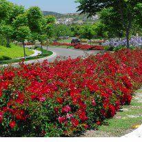 Flower Carpet roses - Anthony Tesselaar International