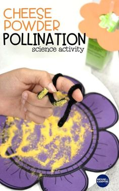 Pollination activity for kids using mac cheese powder and pipe cleaners A fun handson science activity ideal for first and grade students learning about insects. Insect Activities, Science Activities For Kids, Kindergarten Science, Science Experiments Kids, Sequencing Activities, Science Projects, Science Ideas, Science Classroom, Sensory Activities