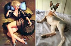 awesome Cats That Pose Like Pin Up Girls (18 pics)