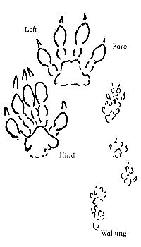 Animal Tracks | Missouri Department of Conservation