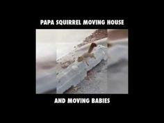 cheaptravelbooker blogg: very funny papa squirrel moving house and moving b...
