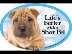 Life& better with a Shar Pei x Oval Magnet Made in the USA Shar Pei Rescue, Shar Pei Fever, Pet Dogs, Dog Cat, British Spelling, State Of Grace, My Buddy, Dogs Of The World, I Love Dogs