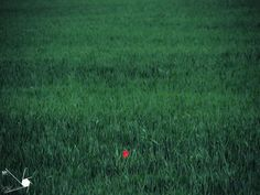 Poppy | by Munns Foto Poppy, Olympus Digital Camera, Album, Nature, Photography, Fotografie, Poppies, Photo Shoot, The Great Outdoors