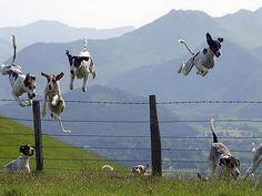 cachorros voando