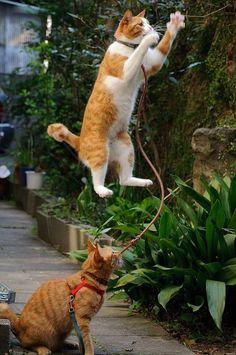 Catdini……the amazing floating cat….