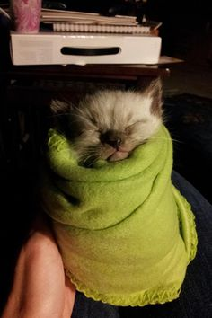 6 baby animals wrapped up like adorable burritos