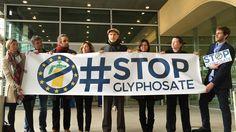 #Glyphosate : l'Europe divisée sur la question - Franceinfo: Franceinfo Glyphosate : l'Europe divisée sur la question Franceinfo Depuis des…