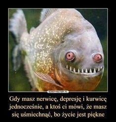 Funny Photos, Funny Images, Wtf Funny, Hilarious, Hahaha Hahaha, Polish Memes, Weekend Humor, Best Memes Ever, Funny Mems