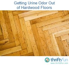 How Do I Remove The Urine Smell From A Wood Floor Floors - How to get rid of pet odor on wood floors