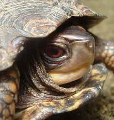 Turtle.... by MarylandParanormal.deviantart.com on @deviantART