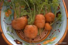 'French Market' carrots grow in heavy clay soil and containers. Here are some from my garden last year.