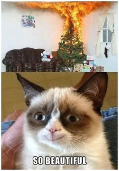The cats face is was making me laugh so hard!