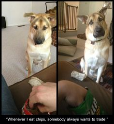 """When I eat chips, someone always wants to trade."" ~Dog Shaming shame - his face...aww"