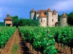 Vineyard, Cahors, Lot Valley, France