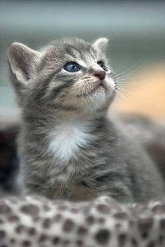 12747081775614、不是不懂只是懒、猫、动物、萌Found on pinterest...great capture!