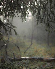 Whiskey & Grit: Photo Rainy Mood, Rainy Days, Rainy Night, Rainy Morning, Autumn Morning, Rainy Weather, Beautiful Places, Beautiful Pictures, I Love Rain