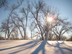 Winter Sunshine  Title: Winter Sunshine  State/Province/Region: Nebraska