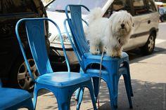 https://flic.kr/p/c4h1JW | Waiting Dog | Paris, France 2012
