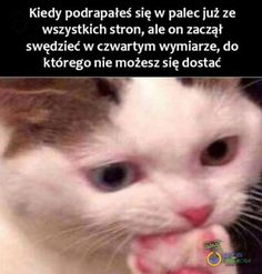 Very Funny Memes, Wtf Funny, Funny Picture Quotes, Funny Pictures, Avatar Ang, Funny Lyrics, Polish Memes, Komodo Dragon, Fun Facts