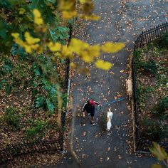Vera Torres a dog walker with Manhattan Paws Walkers strolled through Riverside Park in Manhattan earlier today. The @nytimes staff photographer @heislerphoto who was in Harlem on #nytassignment headed to the park to capture New Yorkers embracing an unseasonably warm November day. #nytfoliage # by nytimes