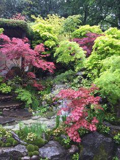 Japanese Garden at RHS Chelsea Flower Show #PinkandGreen Spiriting myself there as I write #SimplyNigella