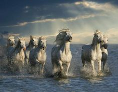 White horse in water.