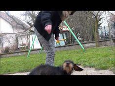 ▶ [ TUTORIEL n°1 ] Apprendre le demi-reculé à votre chien .. - YouTube