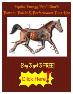 $20 Each -Equine Energy Point Charts - Buy 3 get 3 FREE  http://photopuncture.com/s/EEP-charts