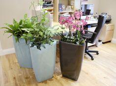 Trifik planters