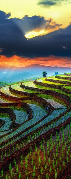 Rice terraces in Chiang Mai, Thailand                                                                                                                                                     More