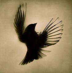 black bird tattoo design ideas