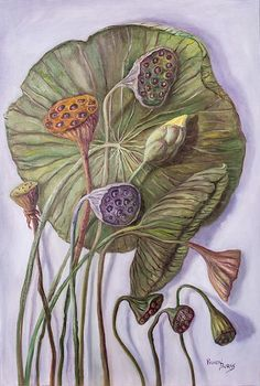 Water Lily Seed Pods Randy Burns