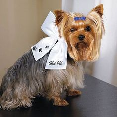 "Super cute dog wearing the ""Best Pet"" Wedding Bow. She is ready for the big day."