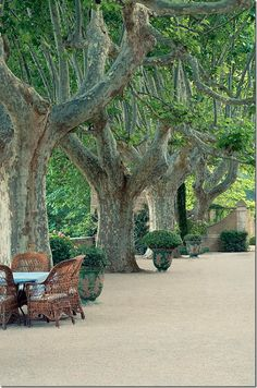 Love these planters under the old plane trees in  Provence