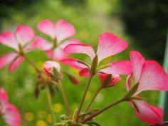 Photo Bloom by Grant Shepherd on 500px