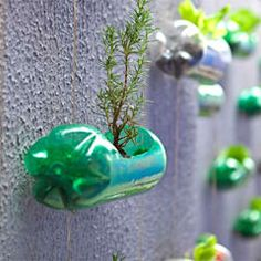 wall Plants Plastic Bottles - Spunky Urban Wall Garden Created From Recycled Plastic Soda Bottles. Easy Plastic Bottle Crafts, Reuse Plastic Bottles, Plastic Recycling, Use Of Plastic, Recycled Bottles, Recycled Art, Recycling Ideas, Plastic Spoons, Plastique Recyclable