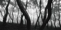 Bae Bien-U        Pine Tree Series      such great photographs!