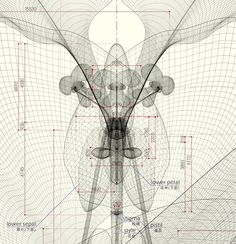Macoto Murayama; Geometric Reproduction, appreciation of the natural