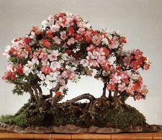 Raft-style, or Netsuranari, bonsai mimic a natural phenomenon that occurs when a tree topples onto its side .