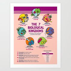 The 7 Biological Kingdoms 🦋🌿🍄 [BIOLOGY] How are living beings classified? What's the difference between autotrophic and heterotrophic… Buy Frames, Printing Process, Knowledge, Art Prints, Infographics, Lovers, Instagram, Products, Art Impressions